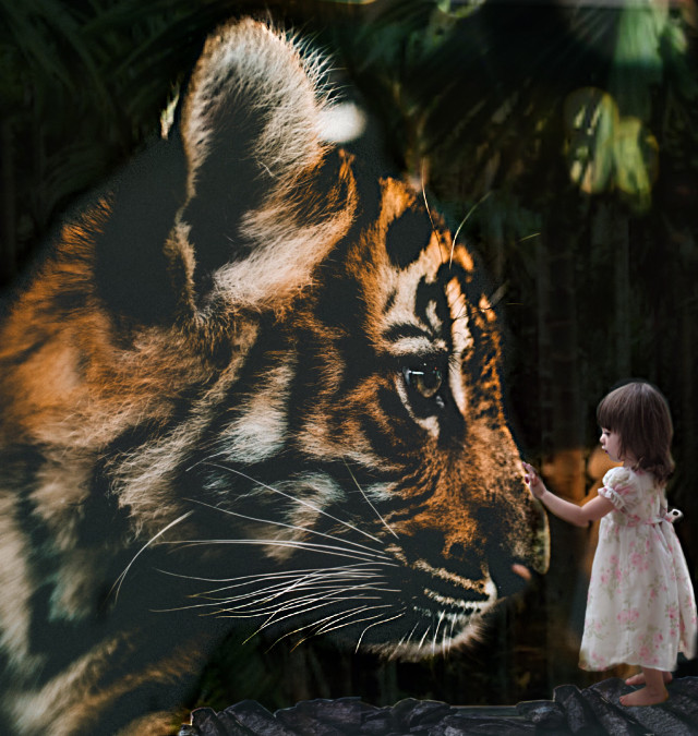 🔹This once was my dream, that is now completed. I actually got to tauch and play with a tiger cub 🐯🧡🐾.                                                               🔹#freetoedit #tiger #jungle #girl #nature #picsart #edit #wild #animal #pet #perfect #tigercub #cute #friendship #remixit