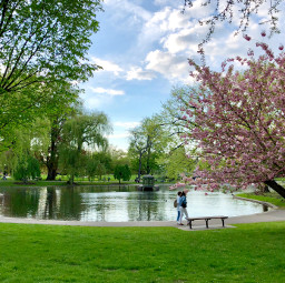 freetoedit spring nofilter blooming park pcspringishere pcpeopleinparks