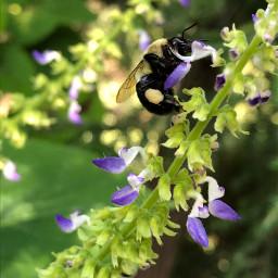 pcspringishere springishere bee honeybee flower
