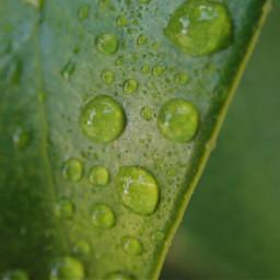 pcspringishere springishere leaf dew marco
