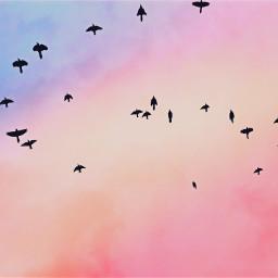 freetoedit flockofbirds silhouette sky sunset