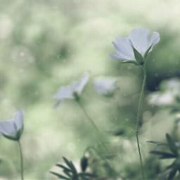 nature countryside wildflowers naturesbeauty tinyflowers simpleflowers lowangleshot naturephotography freetoedit
