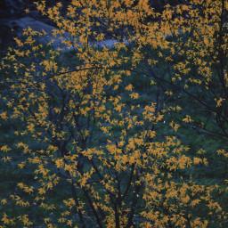 spring flowers photostory naturephotography colorful freetoedit