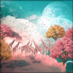 freetoedit fantasy giraffe intheclouds picnic