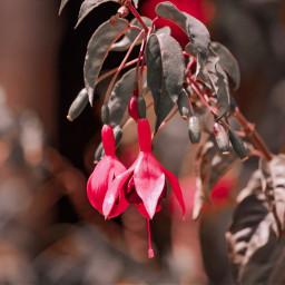 freetoedit interesting photography nature naturephotography