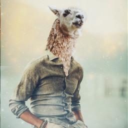 ircllama llama freetoedit lama alpaca