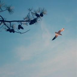 freetoedit nature peacefulness simplicity seagullinflight