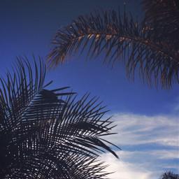 freetoedit nature endoftheday eveningsky palmtrees