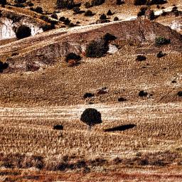 angeleyesimages landscapephotography landscape landscapephotographer tree freetoedit