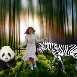 animalqueen zebra panda bird woods