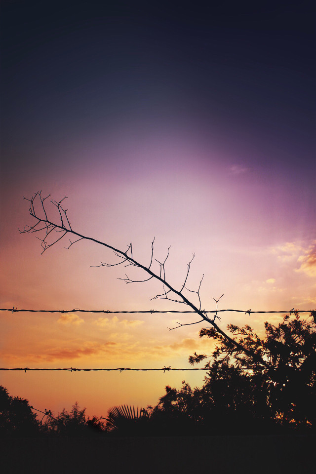 #endoftheday #sunsettime #eveningsky                                                #colorgradient #wall #barbedwire #vegetation #driedbranch #againsttheskylight #sunsetcolors #silhouettes #skyandcloudsbackground #sunsetperfection #urbannaturephotography                                #freetoedit