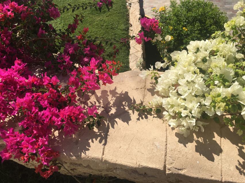 #photography #nature #flowers #egypt #amazing #freetoedit