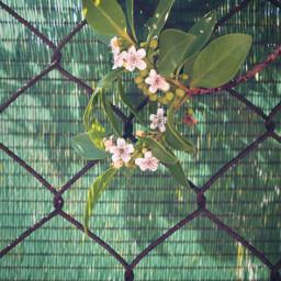 freetoedit bushes shrubs flowerybranch springvibes