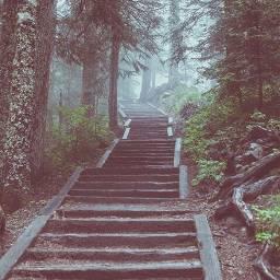 stairways stairs pnw oregon nature