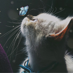 freetoedit interesting cats catsphotography catsofpicsart