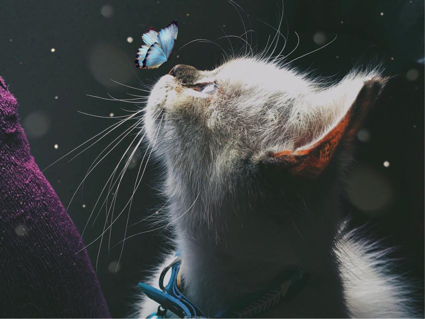 #freetoedit #interesting #cats #catsphotography #catsofpicsart #photography #photographyart #photographynature #photographylife #photographyeveryday #photographyislifee