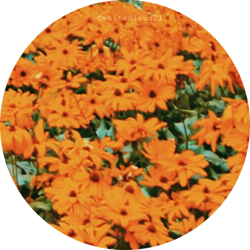 ~photography by @whitecloud21 ~  #flowers #circle #background #orange #flora #nature