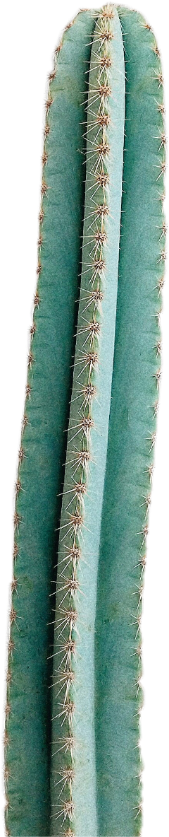 cactus green plant spike vegetation