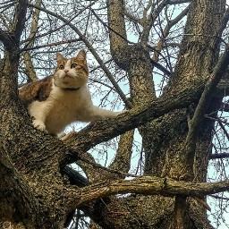 cat animals cats wildandfree tree