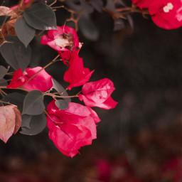 freetoedit naturephotography quotes flowerslovers flowershot