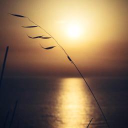 birds sunset cute aesthetic freetoedit