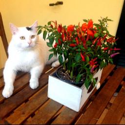 freetoedit mycat spring flowers