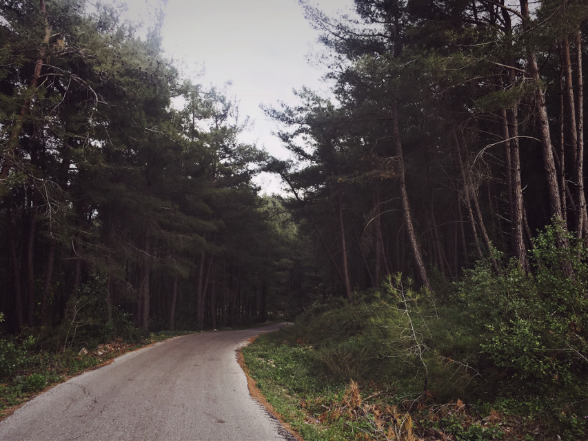 #freetoedit #woods #intothewoods #trees #road #winter #spring #green #photography #iphoneonly #syr