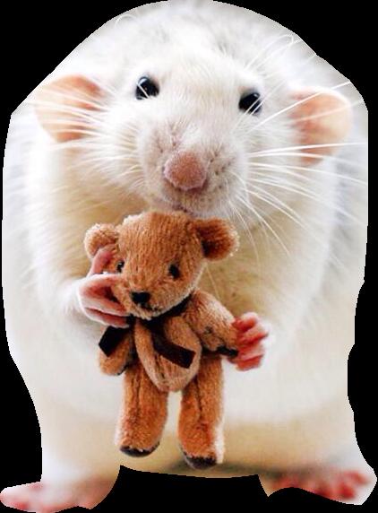 #rats #voteforme #freetoedit