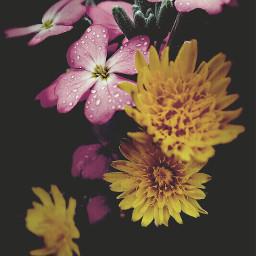 simplethings nature flowers simpleflowers wildflowers freetoedit