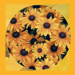freetoedit yellow yellowflower yellowfeed background