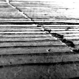 wood panel blackandwhite