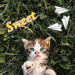 freetoedit irckitten kitten