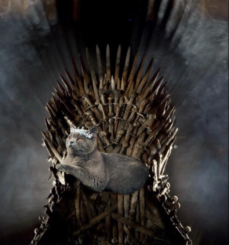 #ForTheThrone #GameOfThrones #CatsOfPicArt #FreeToEdit ?