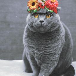 freetoedit fridakahlo cat catlove animals