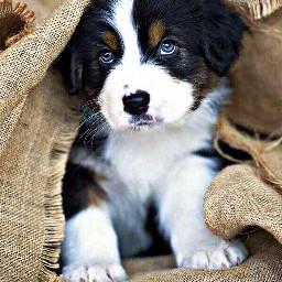 freetoedit burlap puppy petsandanimals dog