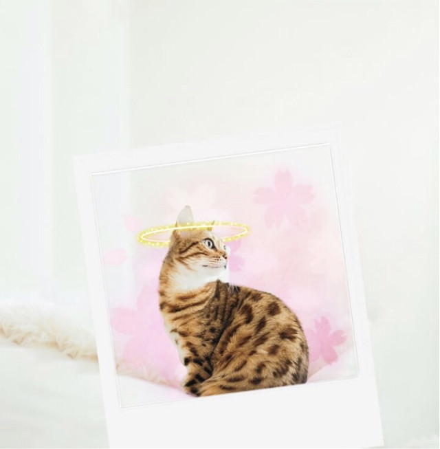 """""""Hoomans, are you kitten me right meow?"""""""" Snap a pic of your pet and make a cute edit to celebrate #NationalPetDay 🐾 Credits to @ava_ausweger #pet #cat #kitty #petlove #freetoedit"""