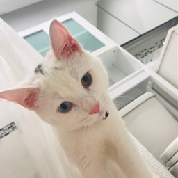 pchappypetday happypetday nationalpetday cat white