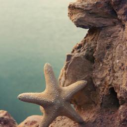 cliff rockysurface seaview starfish nature freetoedit