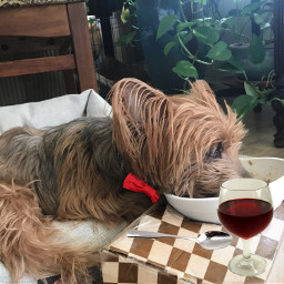 pchappypetday happypetday freetoedit nationalpetday breakfastinbed