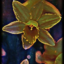 freetoedit narcissus flower oilpaintingeffect neoneffect