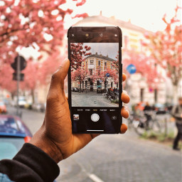 freetoedit cherryblossom blossom shotoniphone photography