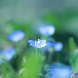 flower macro spring canon blue
