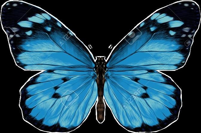 Hey y'alls!!🦋🦋🦋 #butterfly #blue #freetoedit