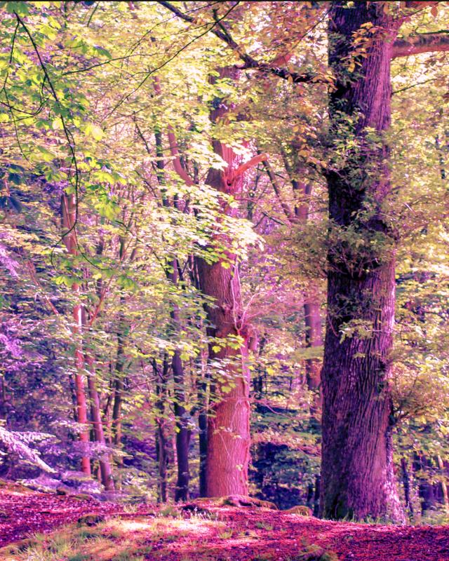 #freetoedit @pa @freetoedit #myedit #madewithpicsart #forest  Original image @thingsthatihaveseen