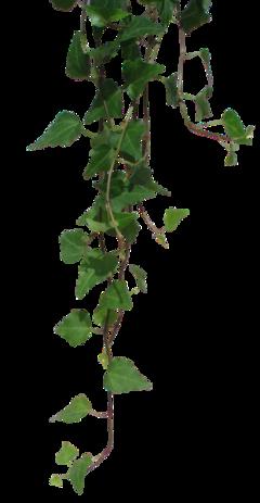 vine nature jungle green vines freetoedit