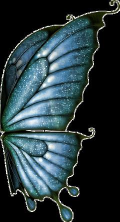 butterfly blue wingsblue butterflywings freetoedit scwings