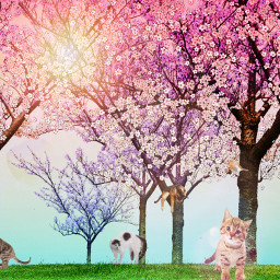 ircblossoming blossoming freetoedit catlove cats