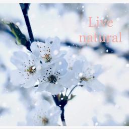 freetoedit livenatural