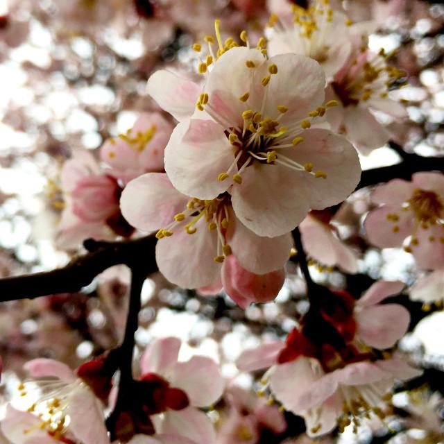 #photography #nature #spring #tree #flowers #amazing #freetoedit