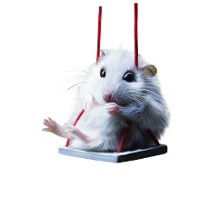 hamster swing freetoedit